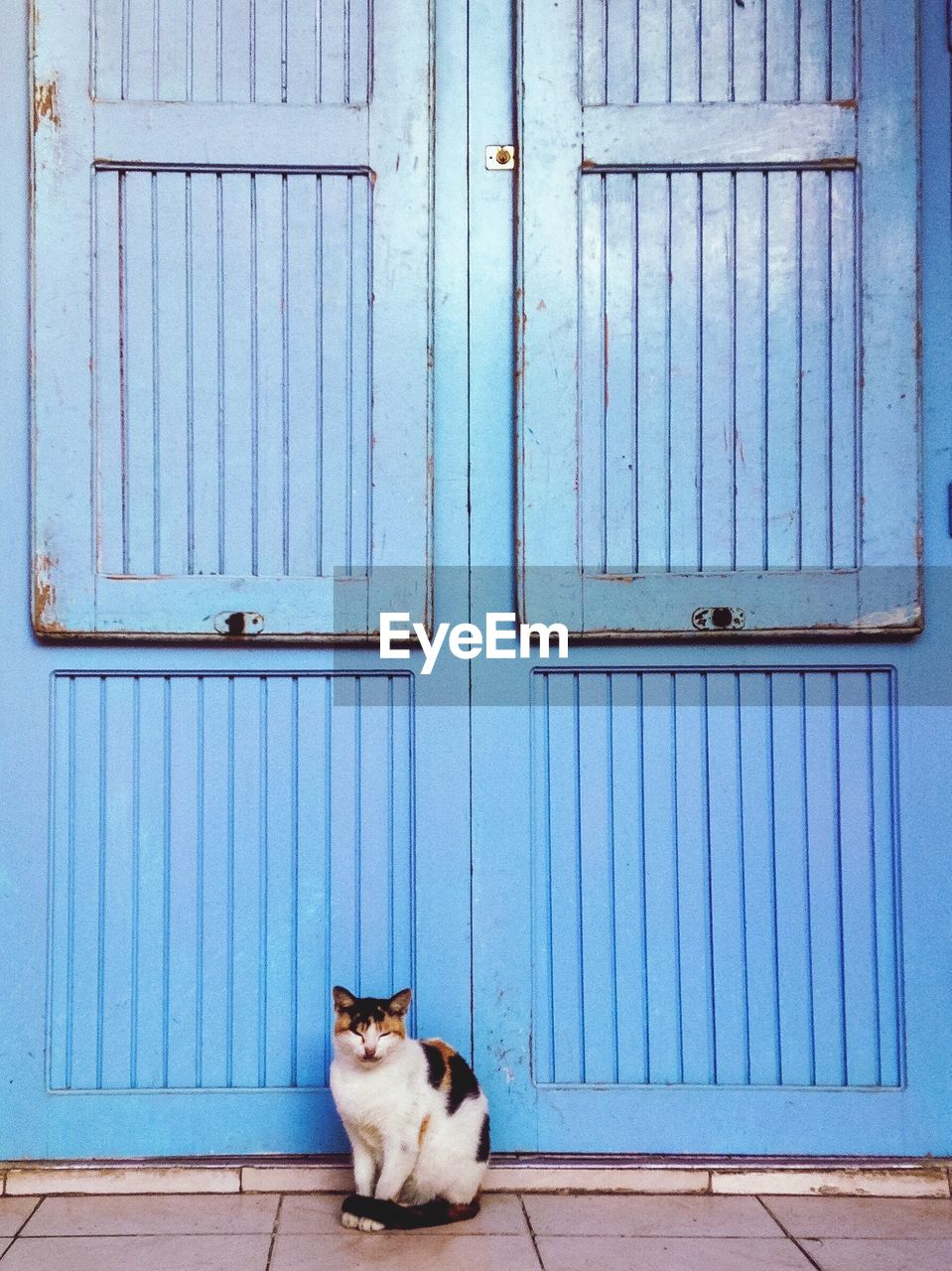 Cat Sitting Against Blue Door