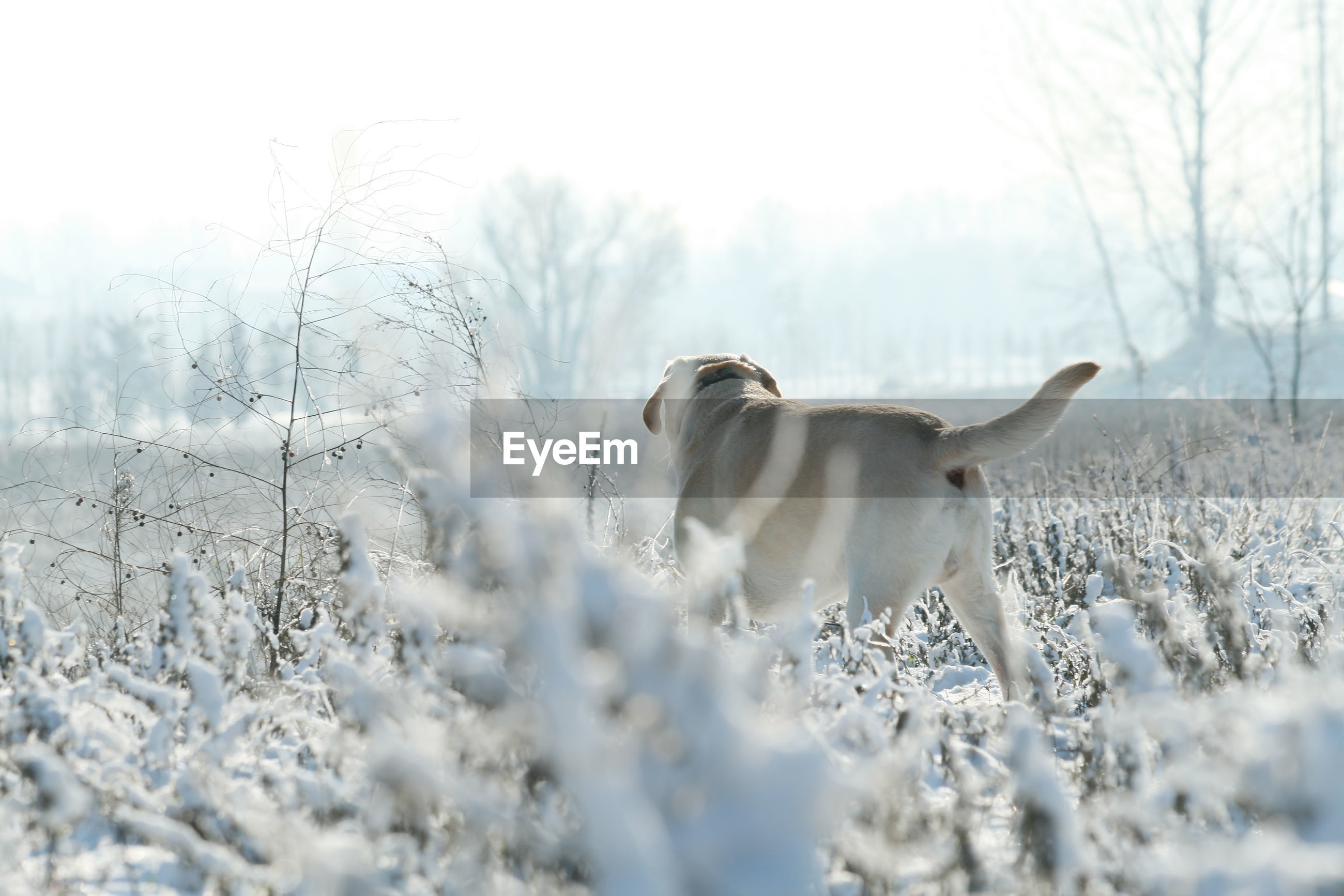 VIEW OF DOG ON SNOW LAND
