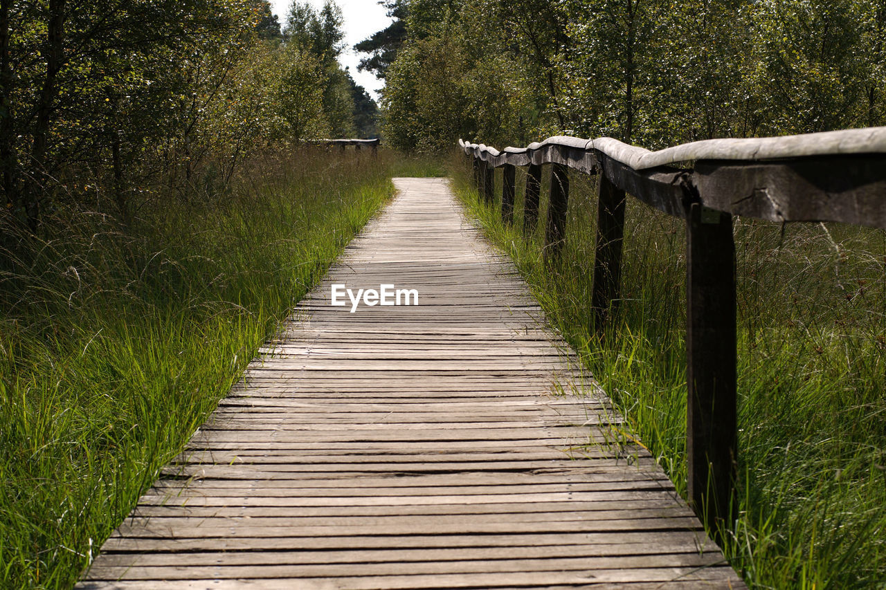 Narrow Wooden Pathway Along Trees