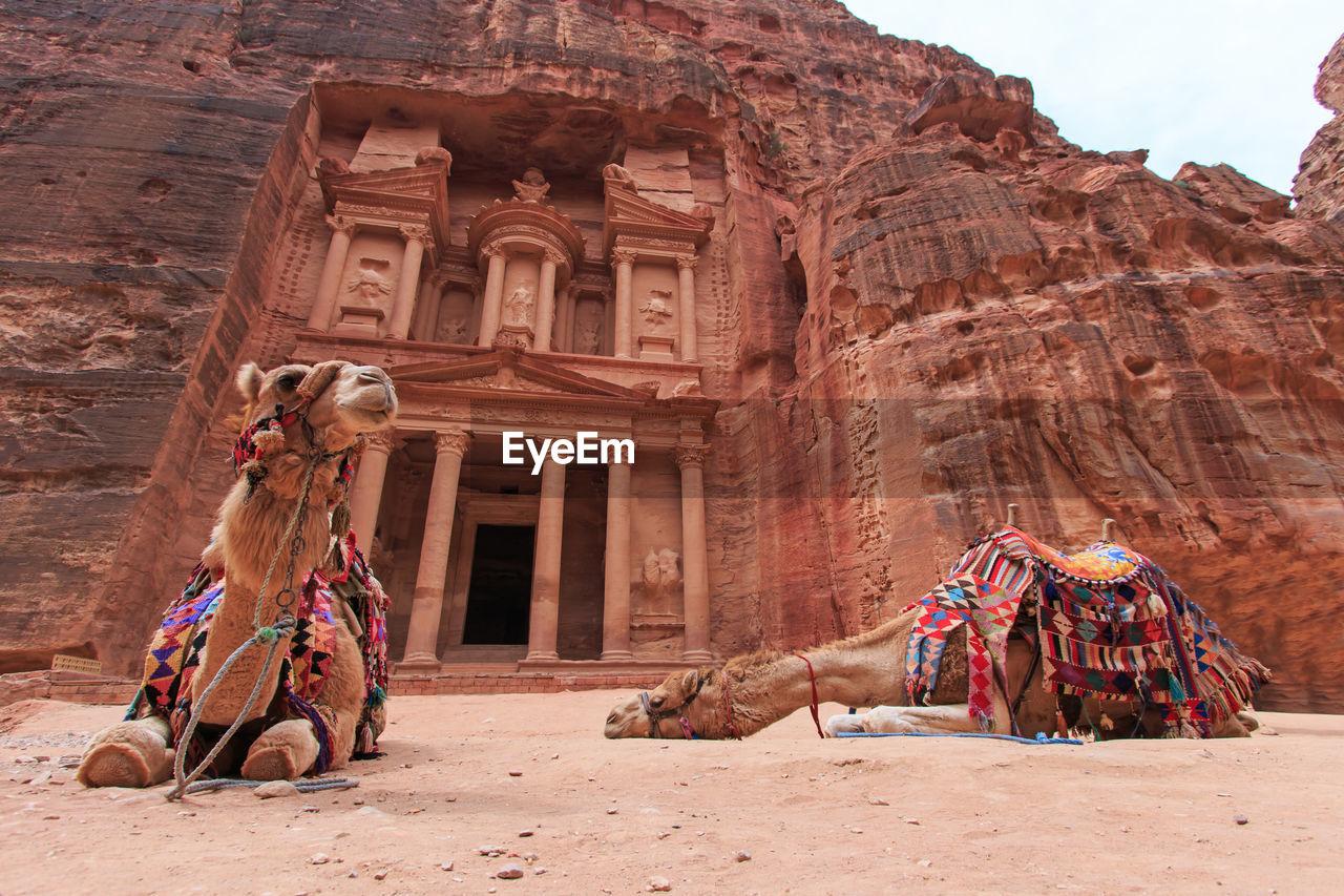 Camels sitting against old building