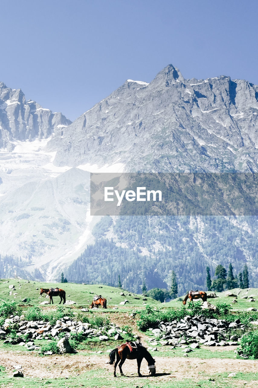Horses Grazing On Field By Mountains Against Clear Sky