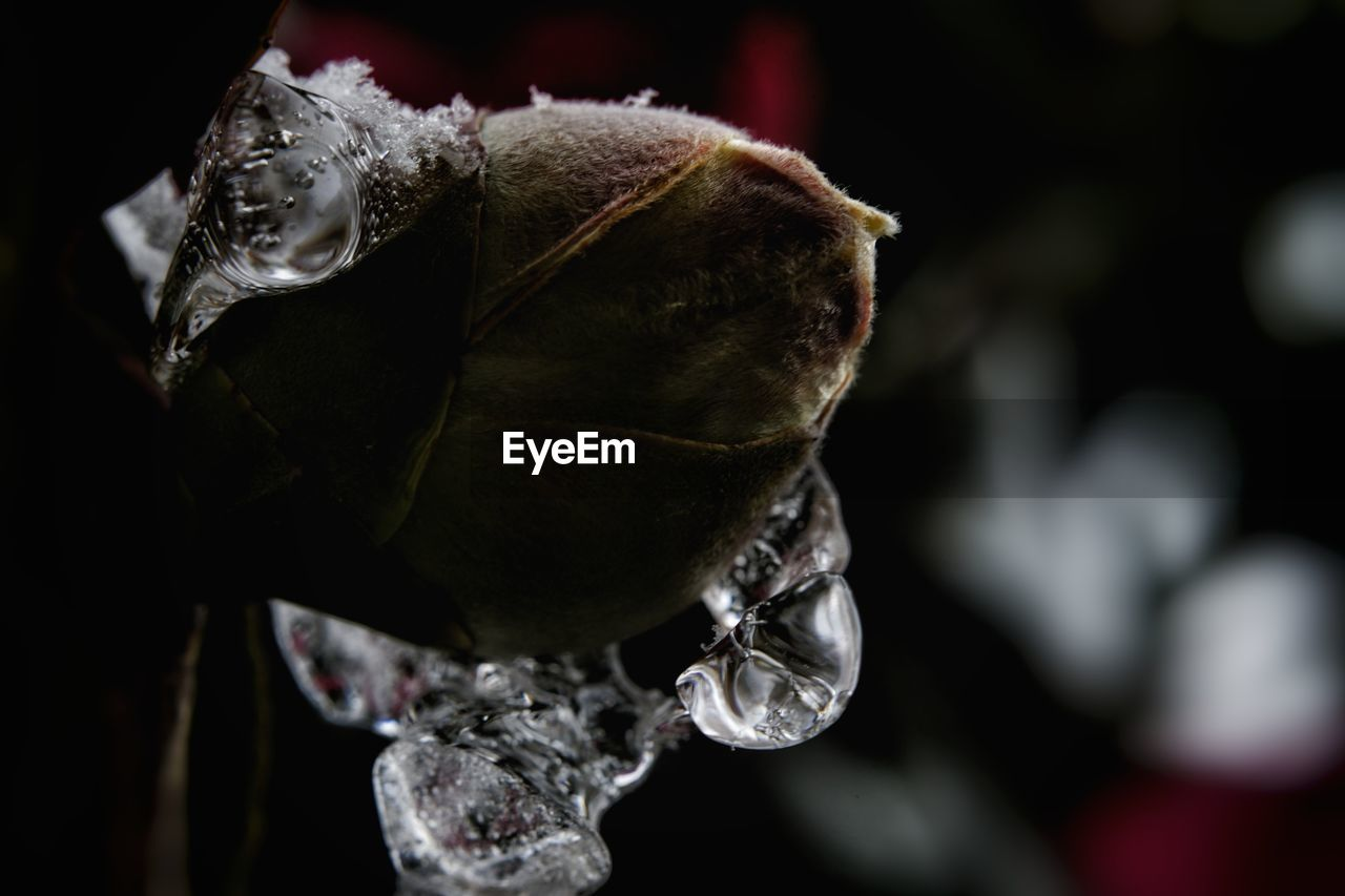 nature, flower, beauty in nature, fragility, drop, close-up, rose - flower, petal, focus on foreground, wet, water, no people, plant, day, freshness, flower head, outdoors, growth