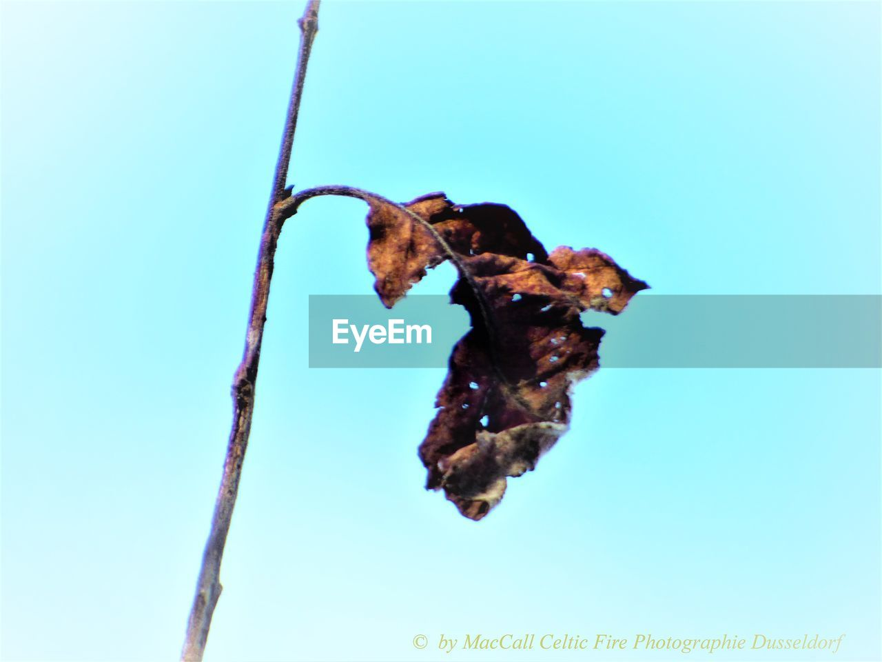 low angle view, no people, blue, clear sky, day, nature, close-up, animal themes, outdoors, beauty in nature, fragility, freshness, sky