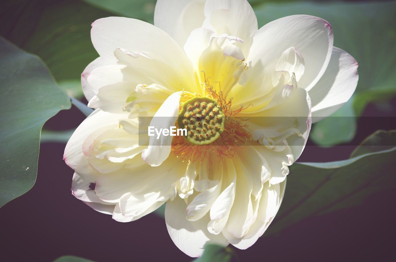 flower, petal, flower head, beauty in nature, fragility, nature, white color, freshness, growth, close-up, pollen, no people, day, plant, blooming, outdoors