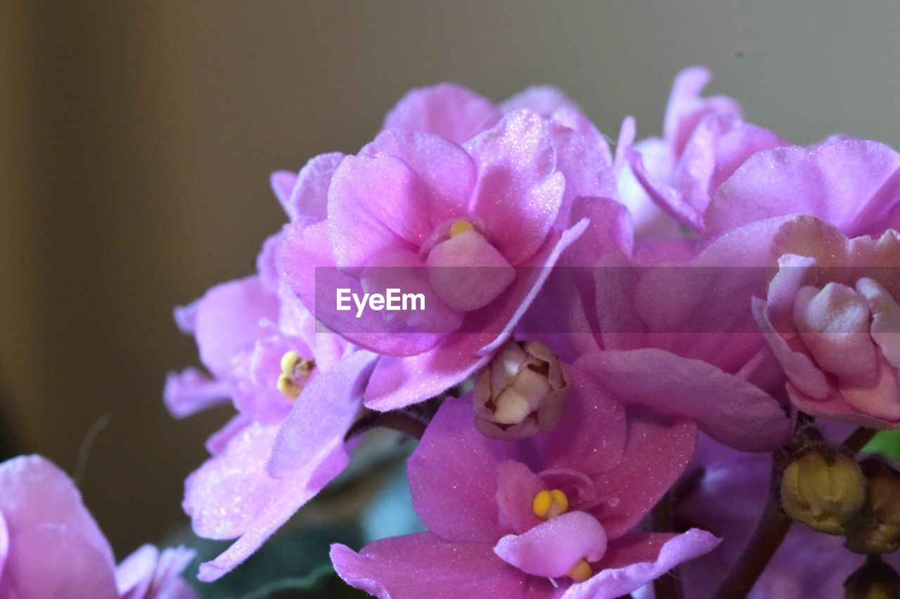 flower, flowering plant, petal, vulnerability, beauty in nature, plant, freshness, fragility, close-up, inflorescence, flower head, growth, pink color, nature, no people, selective focus, botany, purple, pollen, outdoors, bunch of flowers, lilac