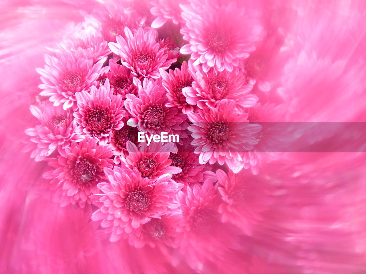flower, petal, fragility, nature, beauty in nature, flower head, pink color, no people, freshness, growth, plant, close-up, outdoors, day