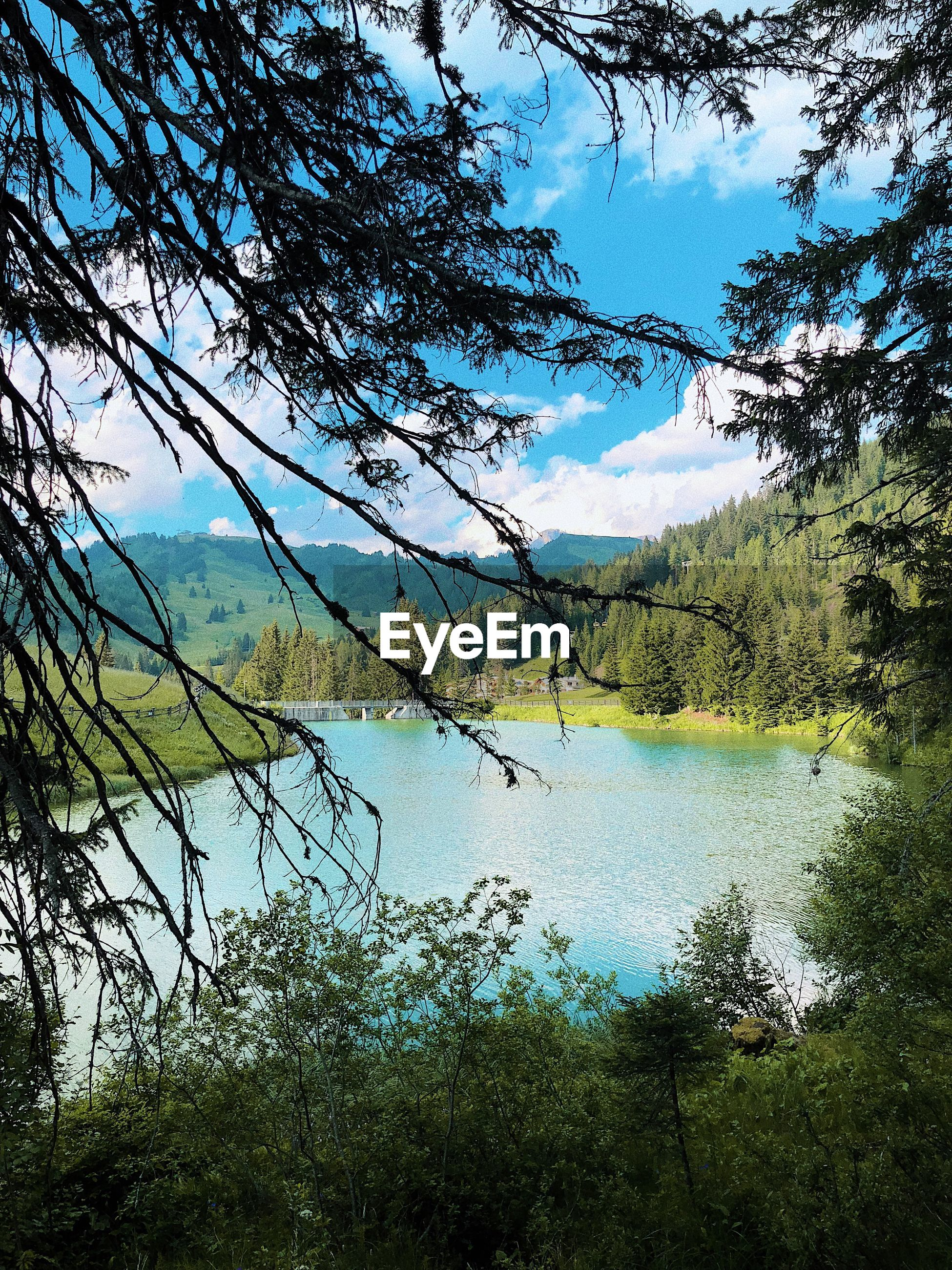 SCENIC VIEW OF LAKE AGAINST SKY AT FOREST