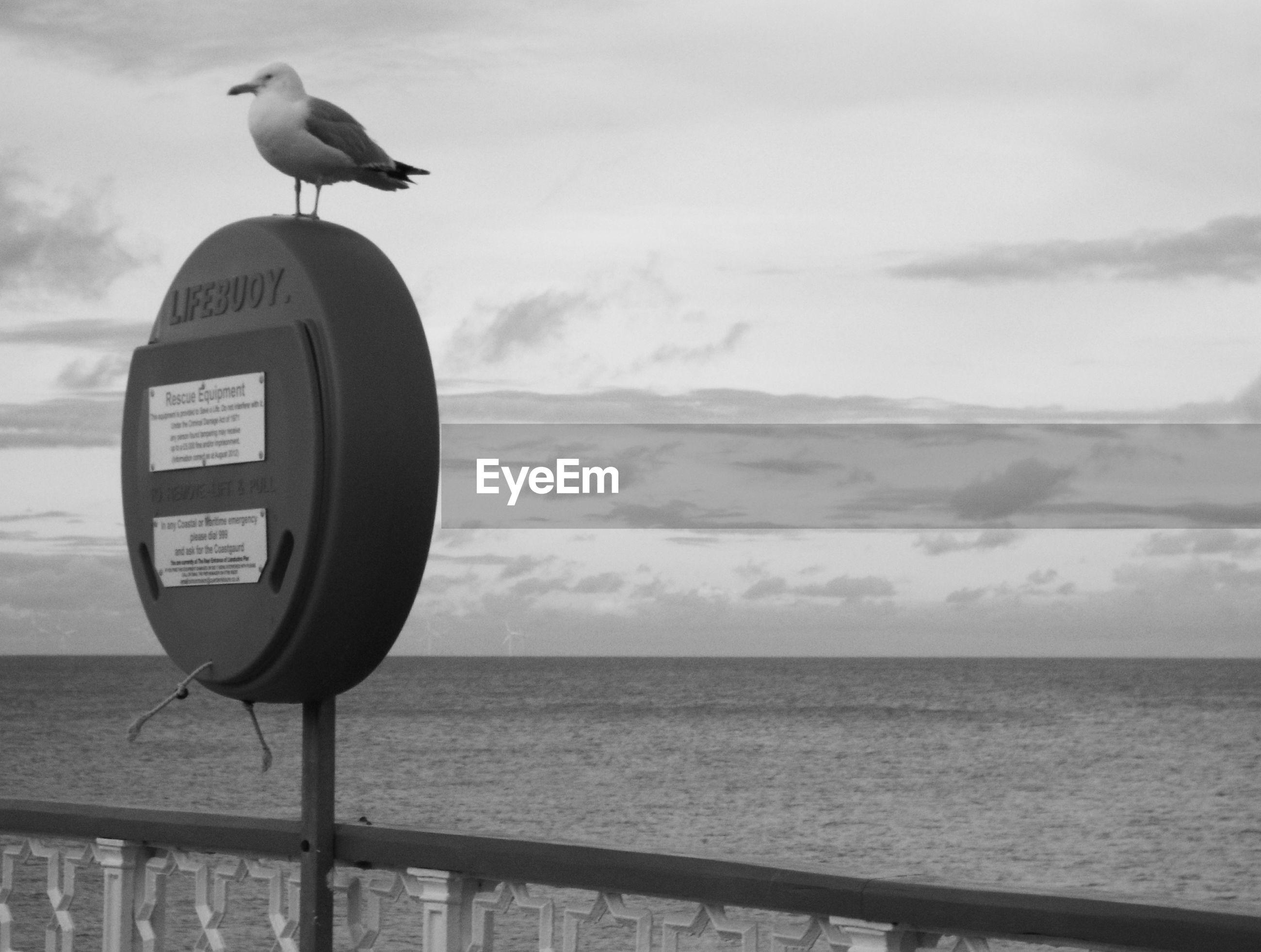 BIRD PERCHING ON SHORE AGAINST SEA
