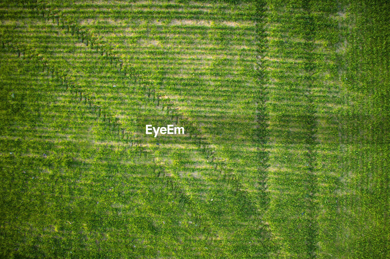 green color, backgrounds, pattern, plant, full frame, grass, environment, textured, nature, landscape, no people, growth, agriculture, rural scene, beauty in nature, field, aerial view, land, abstract, striped, outdoors, textured effect
