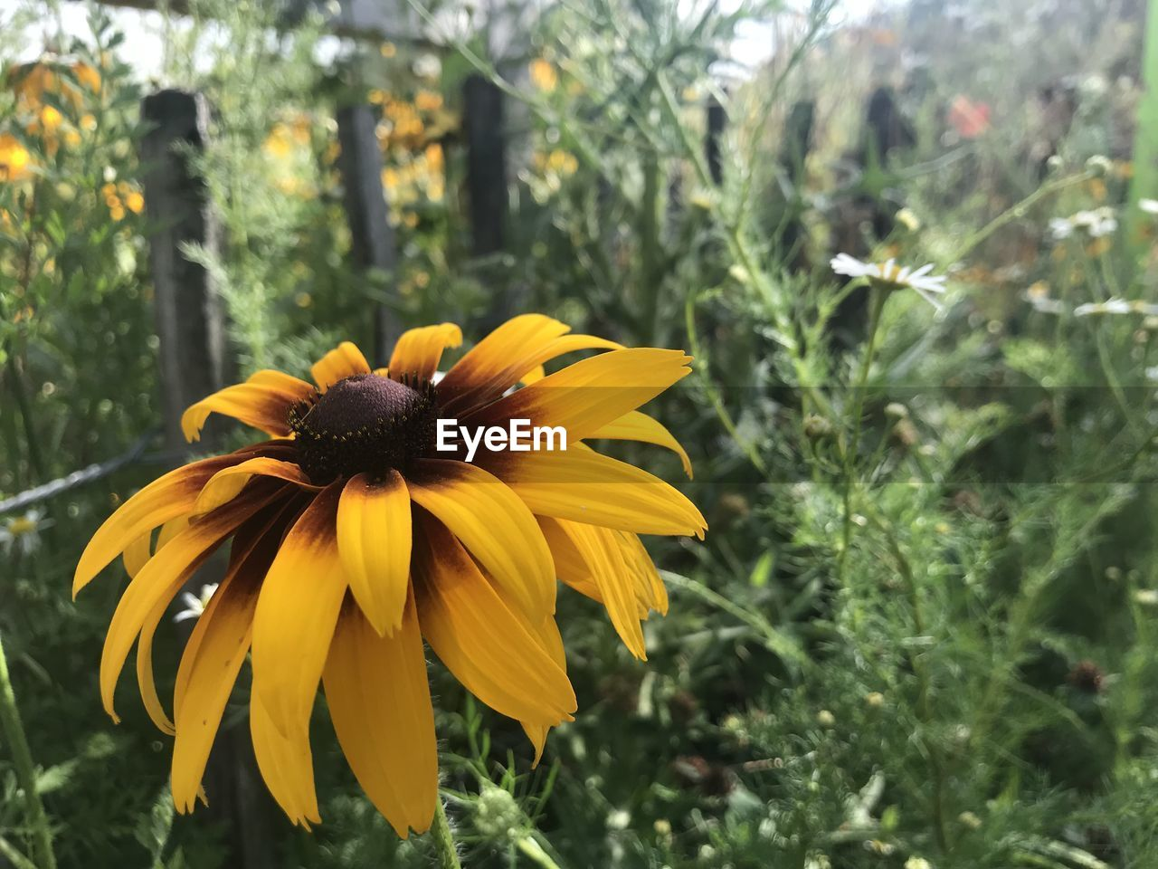 flowering plant, flower, fragility, plant, vulnerability, growth, yellow, freshness, petal, beauty in nature, flower head, inflorescence, close-up, focus on foreground, coneflower, day, nature, no people, pollen, outdoors