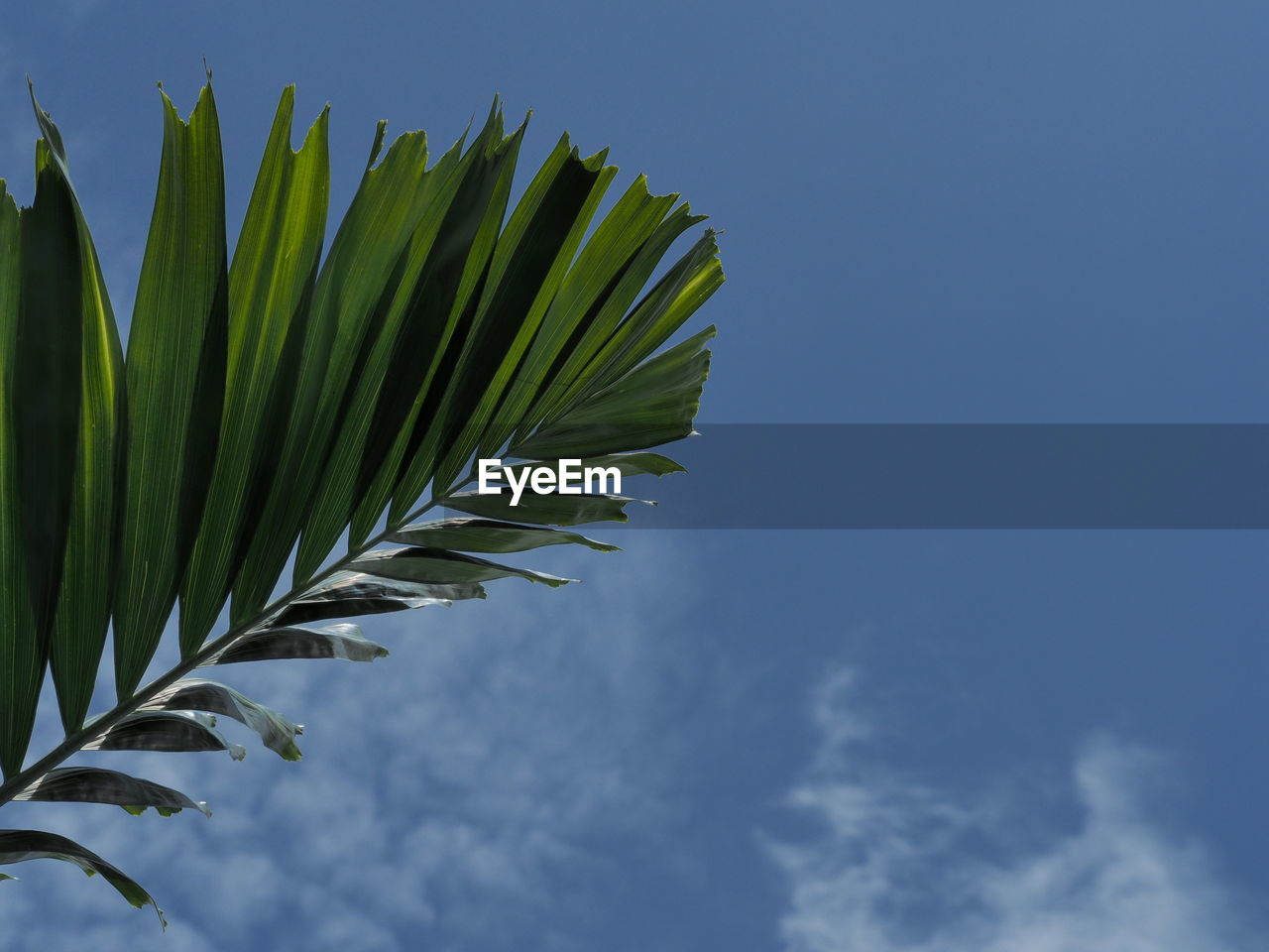 sky, leaf, green color, growth, plant part, cloud - sky, plant, low angle view, no people, nature, beauty in nature, day, close-up, blue, palm leaf, palm tree, tree, outdoors, freshness, focus on foreground, leaves, spiky