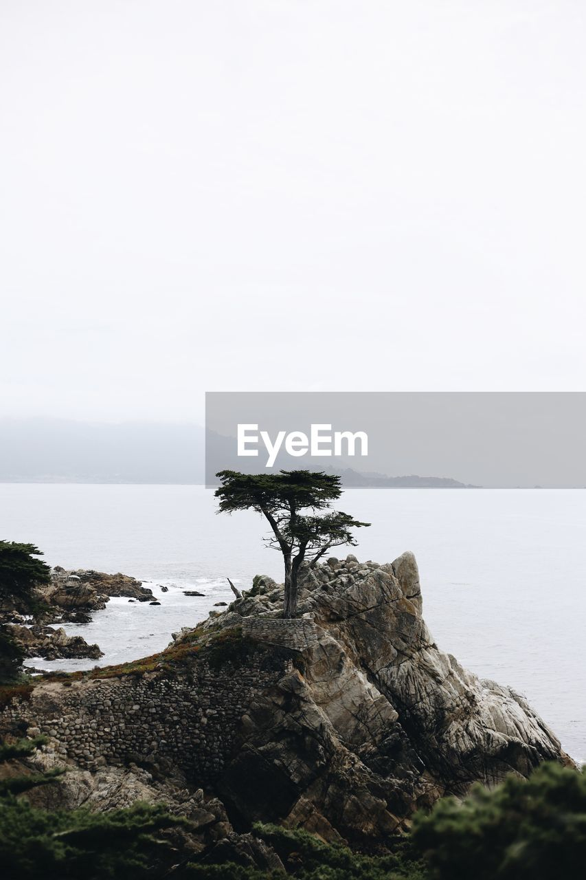 Scenic view of single tree and the sea against clear sky