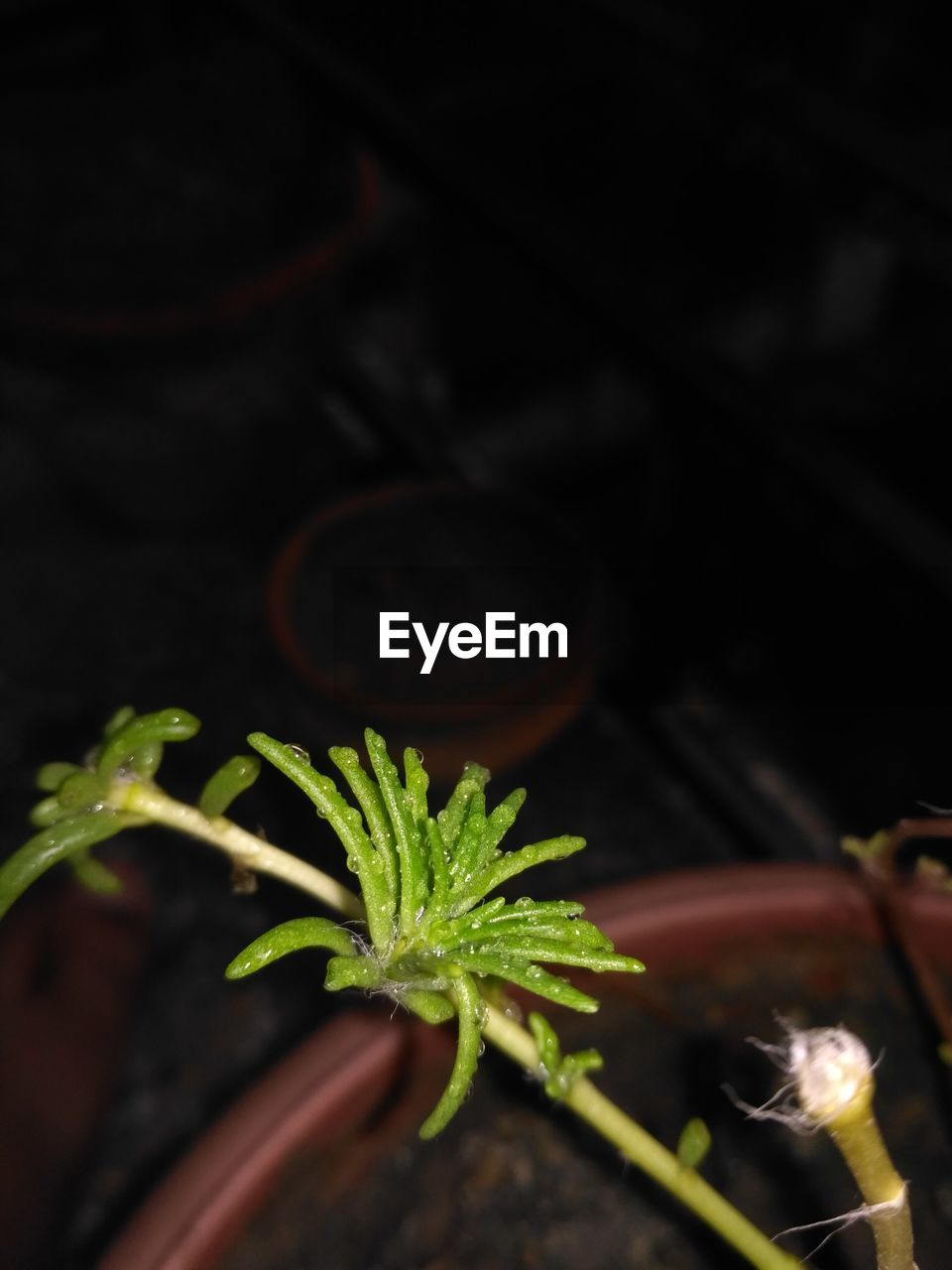 plant, growth, green color, plant part, leaf, close-up, selective focus, beauty in nature, nature, no people, freshness, outdoors, potted plant, night, focus on foreground, high angle view, beginnings, food, herb