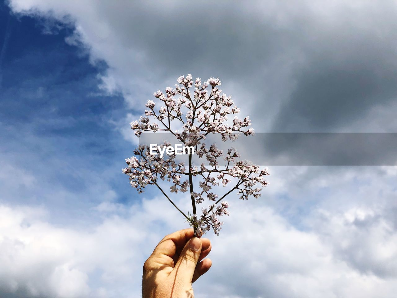 Low Angle View Of Hand Holding Twig Against Cloudy Sky