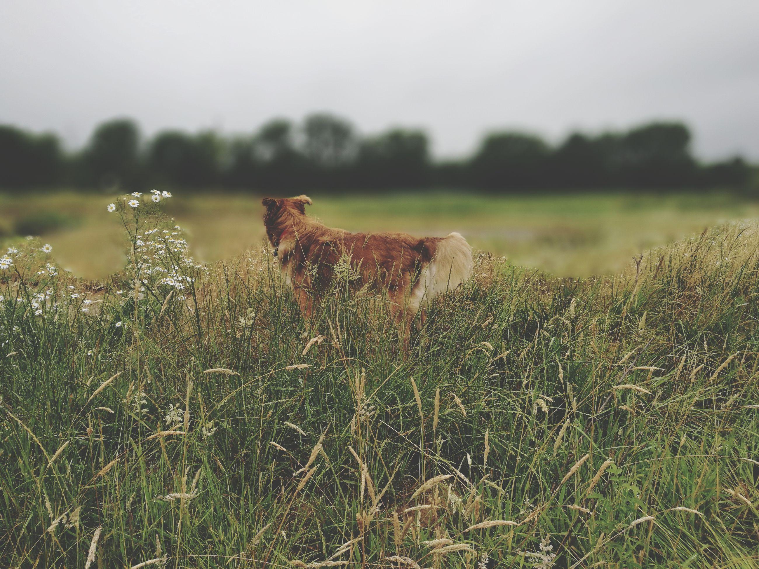Dog on field in summer