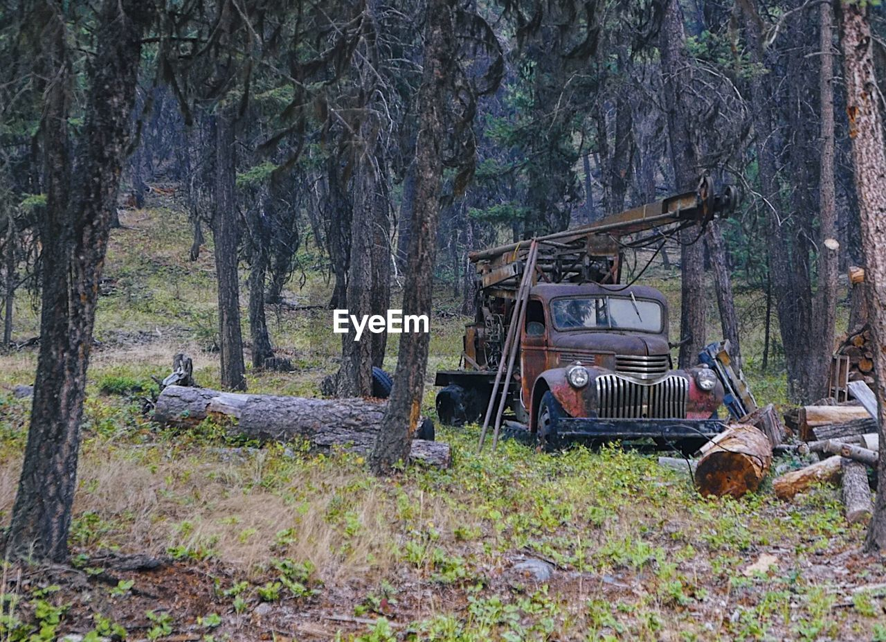 tree, tree trunk, plant, trunk, land, forest, nature, day, transportation, mode of transportation, abandoned, field, no people, land vehicle, grass, outdoors, obsolete, growth, woodland, old, deterioration