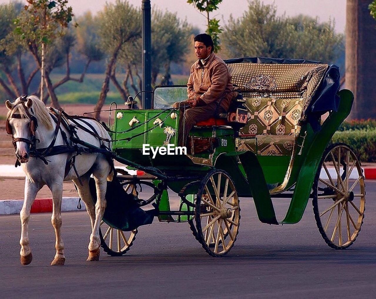 transportation, mode of transport, one person, full length, outdoors, one man only, day, horse cart, standing, animal themes, adult, only men, adults only, mammal, tree, people