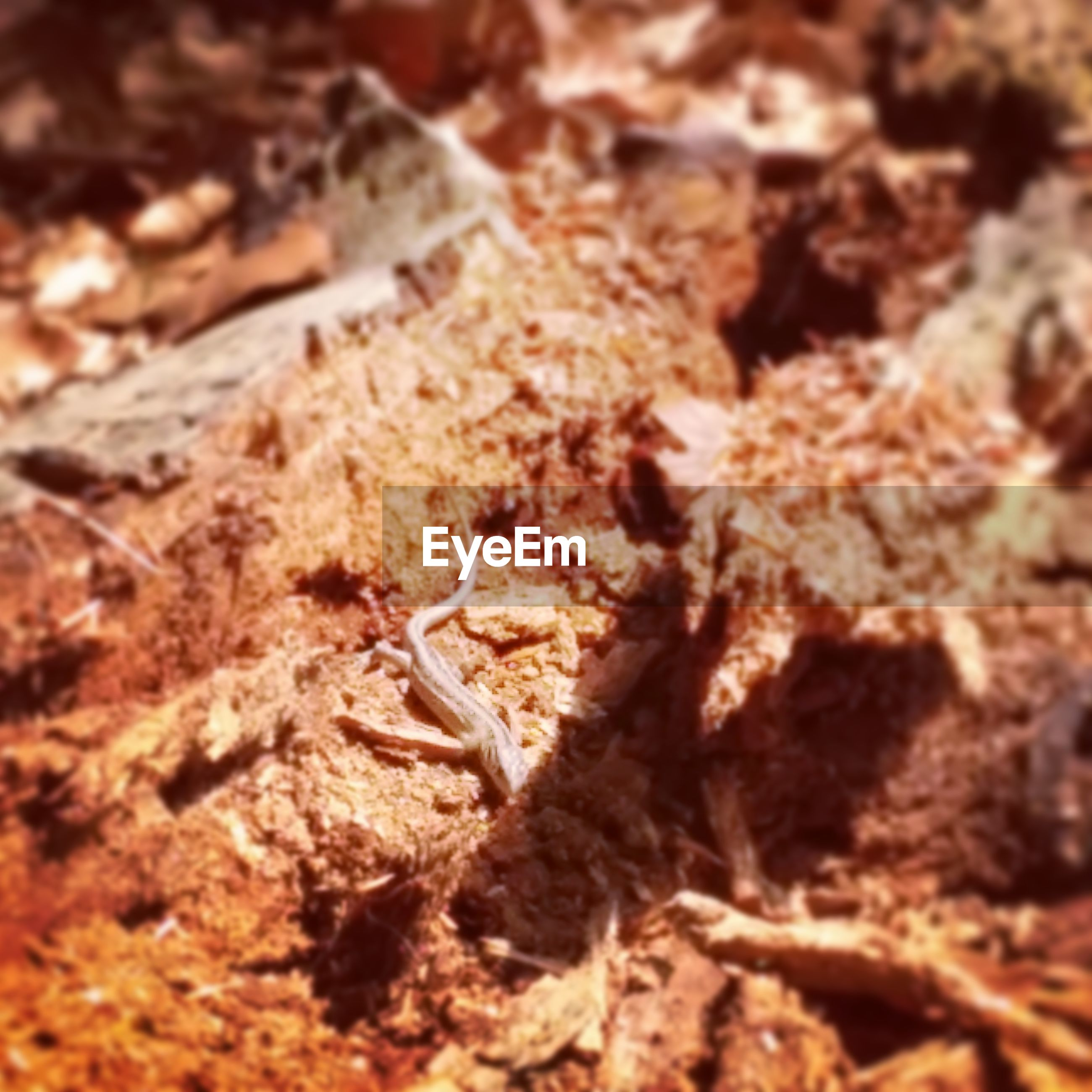 textured, selective focus, close-up, rough, nature, rock - object, full frame, backgrounds, brown, high angle view, dry, outdoors, no people, day, focus on foreground, sunlight, field, natural pattern, rock, ground