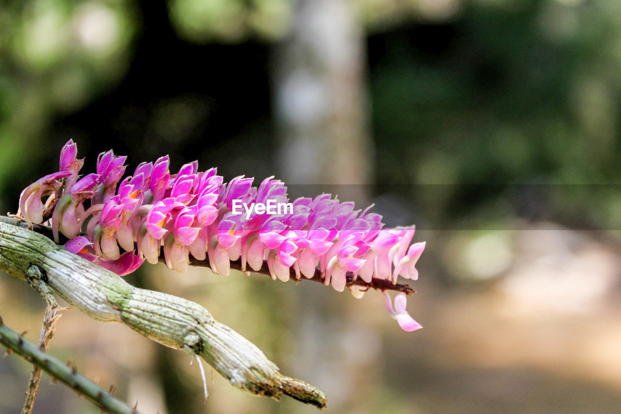 pink color, flower, flowering plant, plant, beauty in nature, close-up, fragility, focus on foreground, growth, vulnerability, day, freshness, petal, nature, no people, flower head, inflorescence, outdoors, animal, animals in the wild, springtime, purple