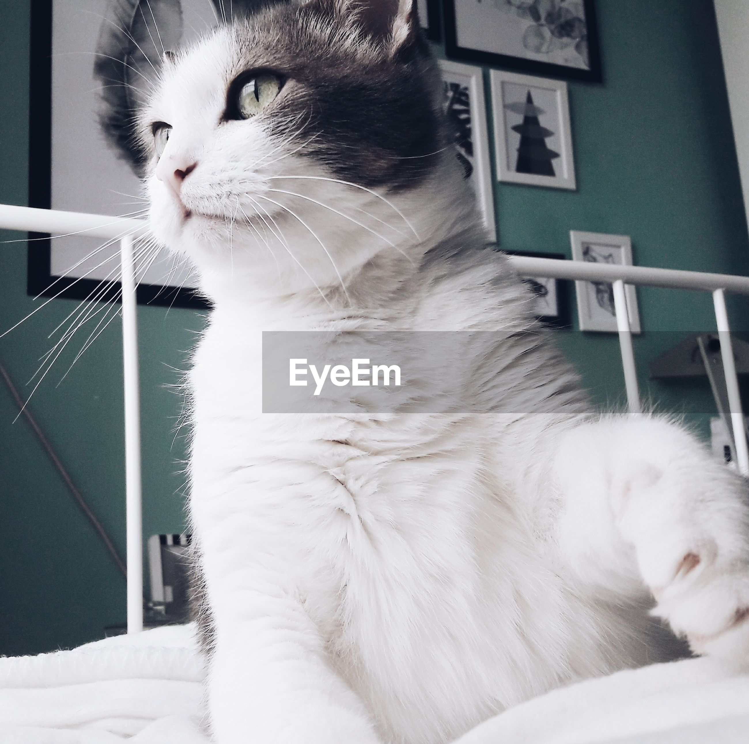 Close-up of cat sitting on bed at home