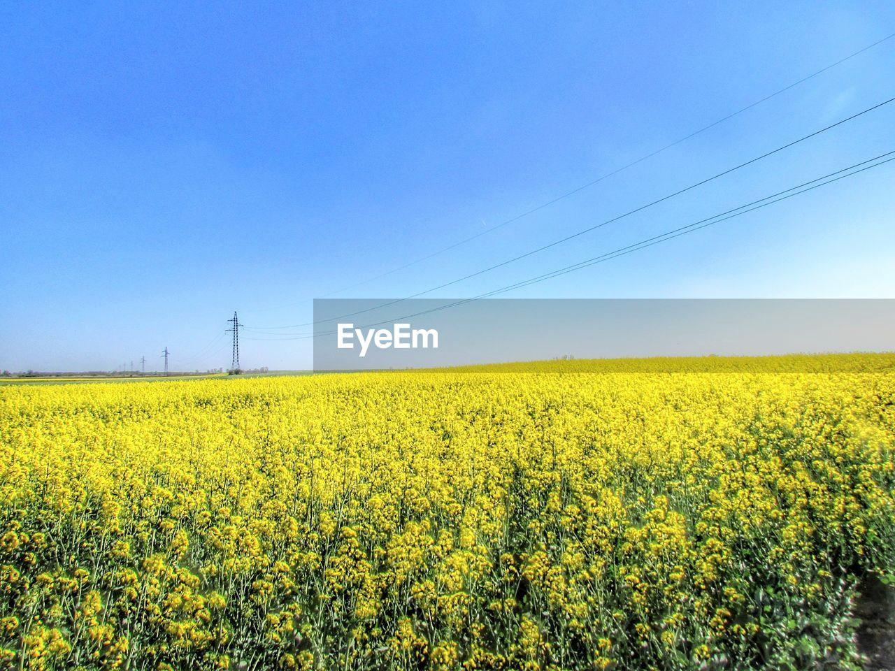 yellow, field, landscape, agriculture, sky, beauty in nature, scenics - nature, land, flower, environment, rural scene, growth, tranquility, tranquil scene, clear sky, oilseed rape, crop, nature, electricity, farm, no people, outdoors, power supply, springtime