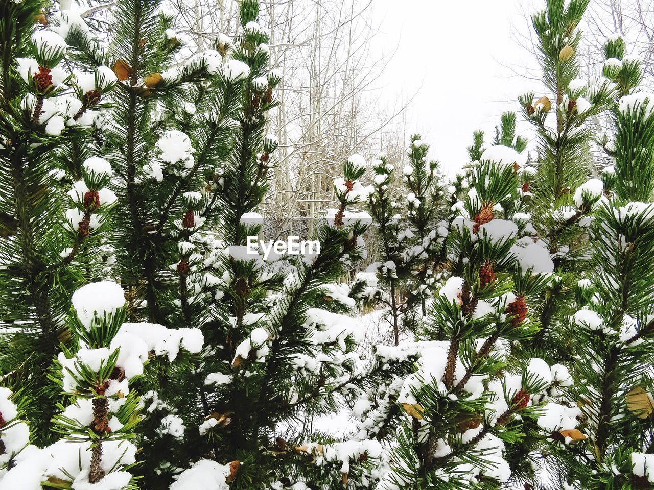 growth, nature, flower, plant, winter, snow, beauty in nature, no people, tree, outdoors, fragility, blooming, day, freshness, sky