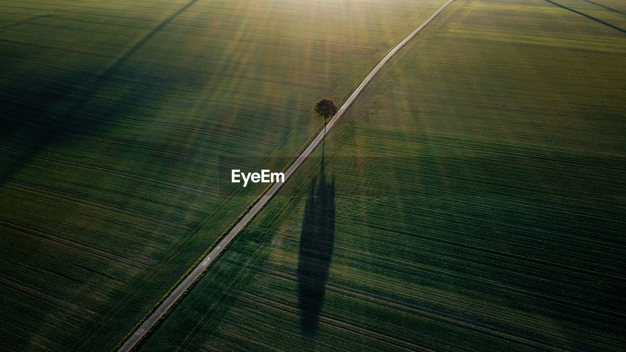Aerial View Of Tree On Road Amidst Green Landscape During Sunset