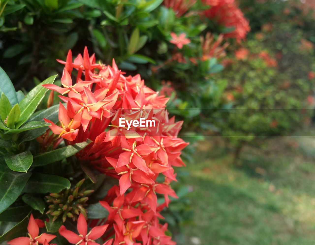 flowering plant, flower, plant, growth, petal, beauty in nature, freshness, fragility, vulnerability, flower head, close-up, inflorescence, red, focus on foreground, nature, day, green color, no people, plant part, leaf, outdoors