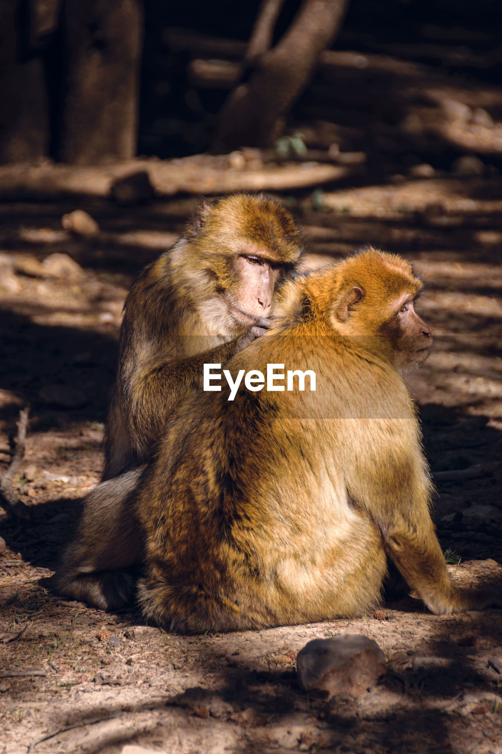 Close-up of monkeys sitting at zoo