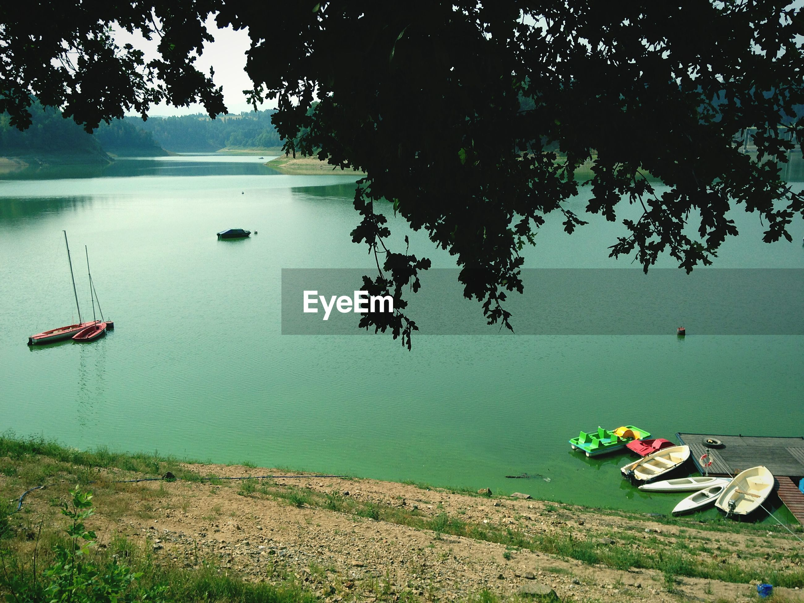 High angle view of lake with tree branch in foreground