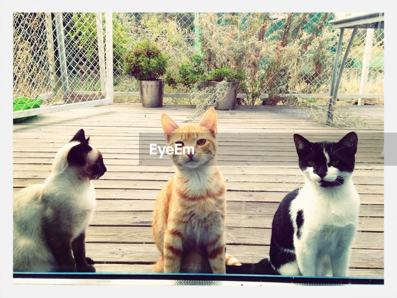 Portrait of three cats on wood paneled floor