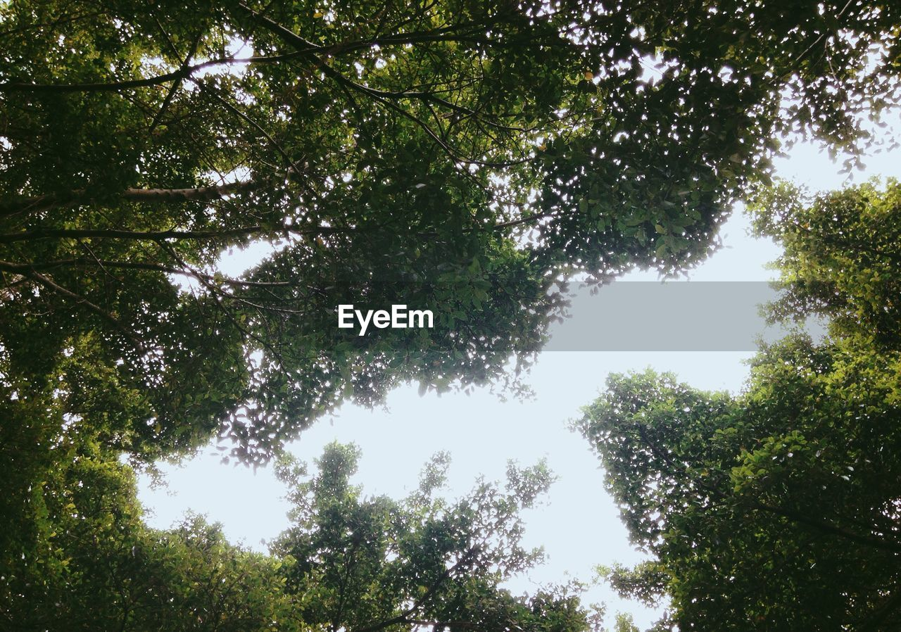 tree, plant, low angle view, growth, beauty in nature, tranquility, forest, sky, no people, day, nature, green color, scenics - nature, tranquil scene, outdoors, branch, land, tree canopy, non-urban scene, sunlight, directly below