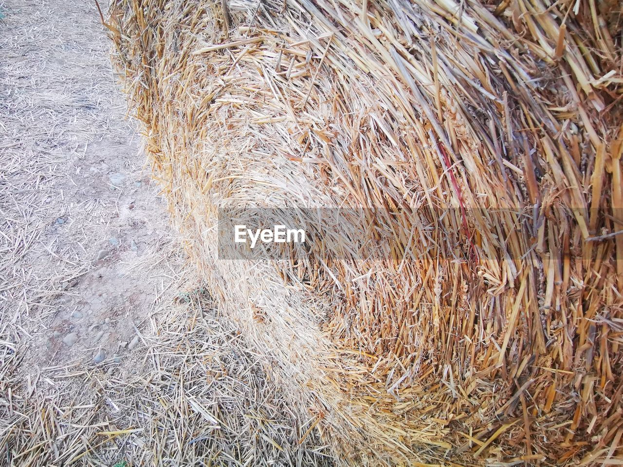plant, day, field, land, agriculture, nature, no people, hay, dry, high angle view, grass, tranquility, outdoors, close-up, farm, bale, straw, brown, rural scene, crop, dried