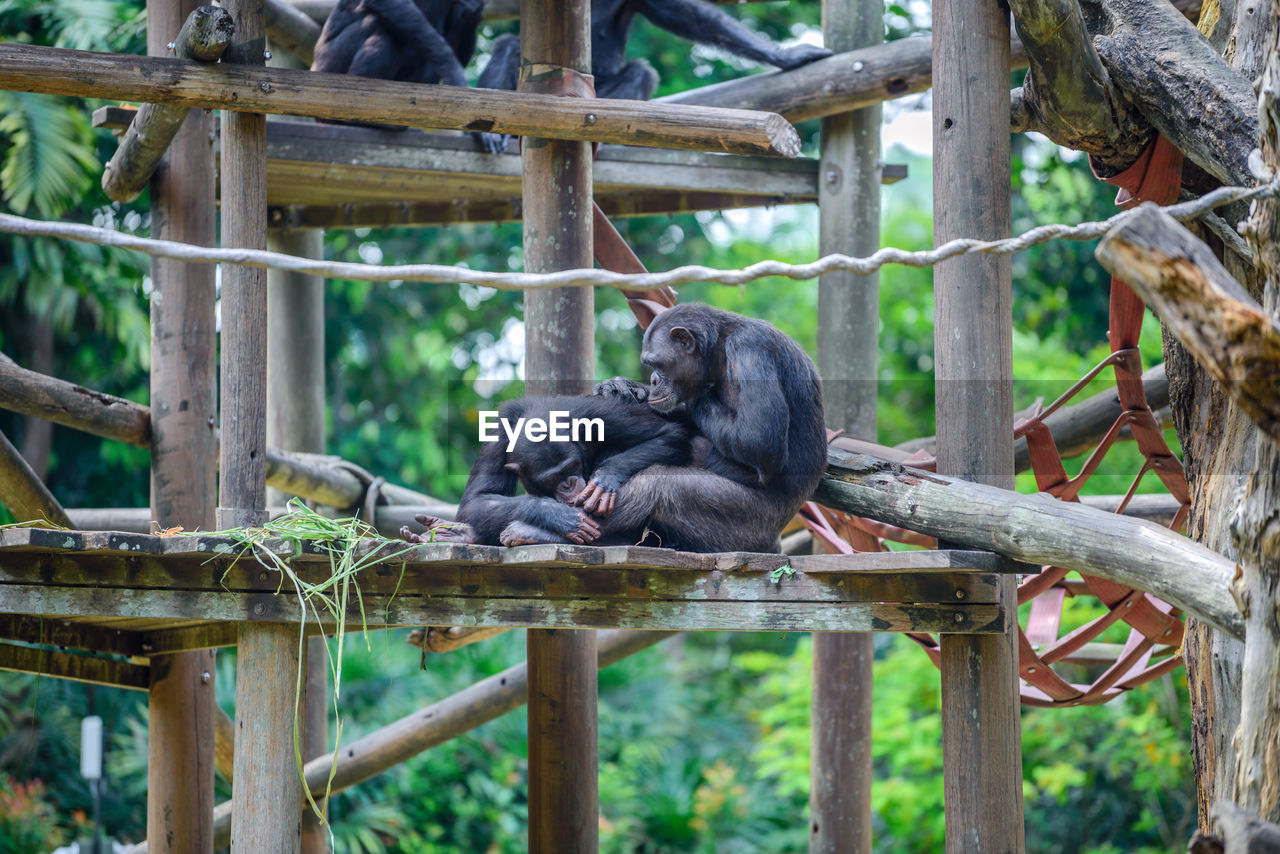 Monkeys sitting on built structure at zoo