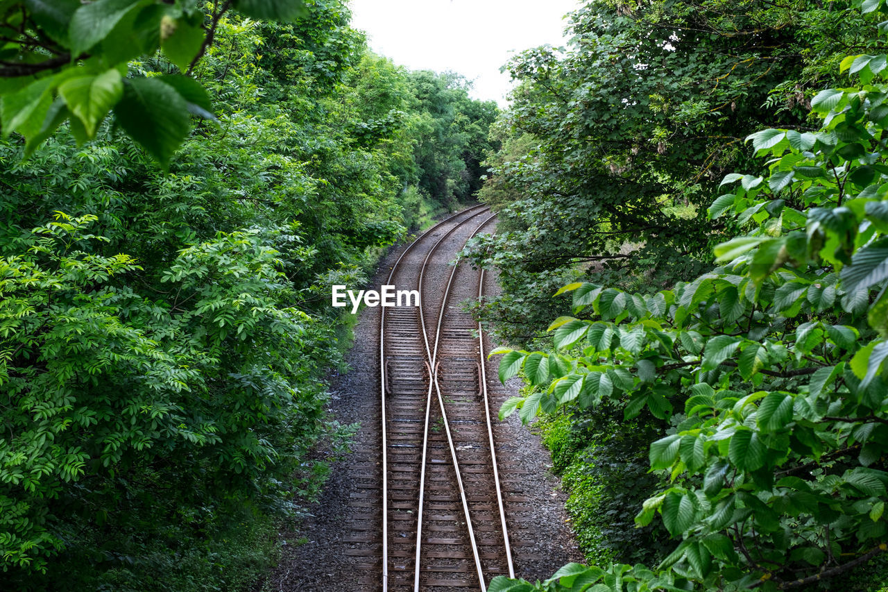 railroad track, rail transportation, transportation, tree, day, green color, nature, no people, growth, plant, outdoors, beauty in nature