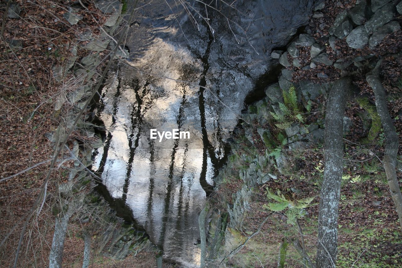 Reflection Of Trees In Stream