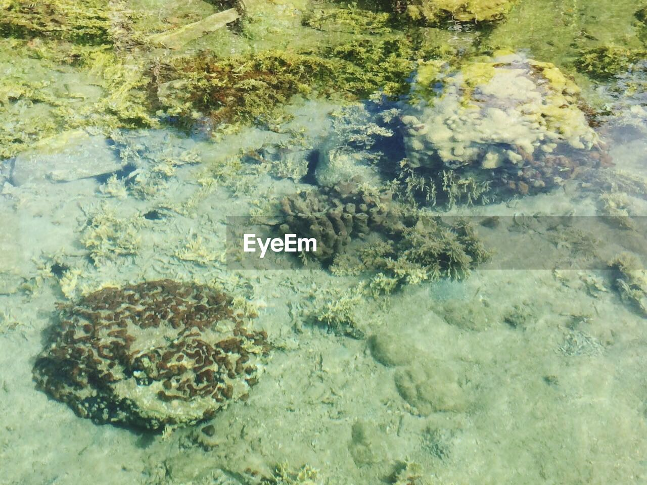 water, no people, nature, underwater, shallow, high angle view, sea life, day, beauty in nature, sea, undersea, outdoors, close-up, animal themes, hot spring