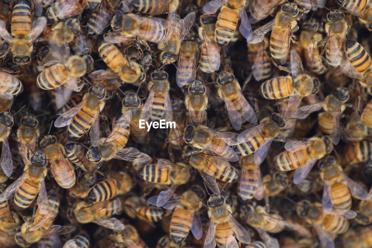 Full Frame Shot Of Bees
