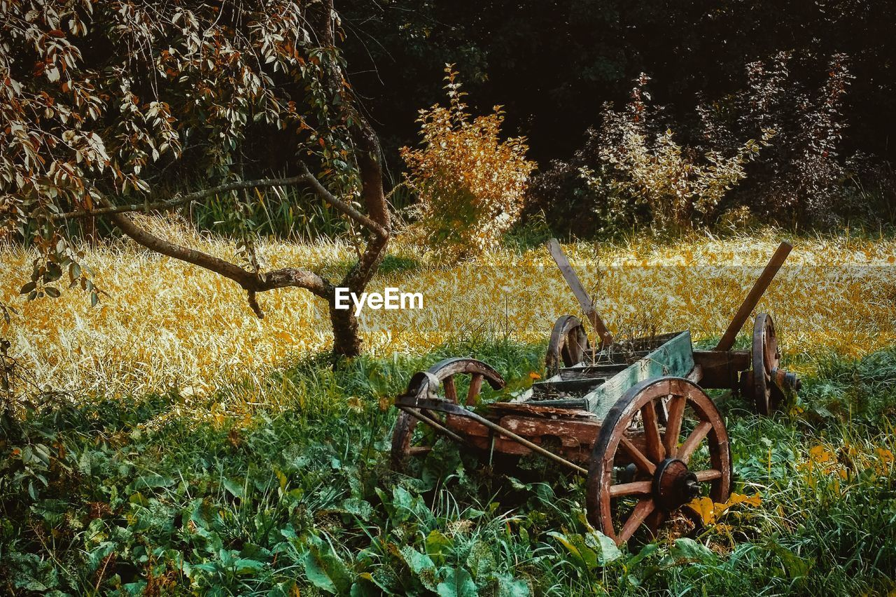 Old Agricultural Equipment On Grassy Field