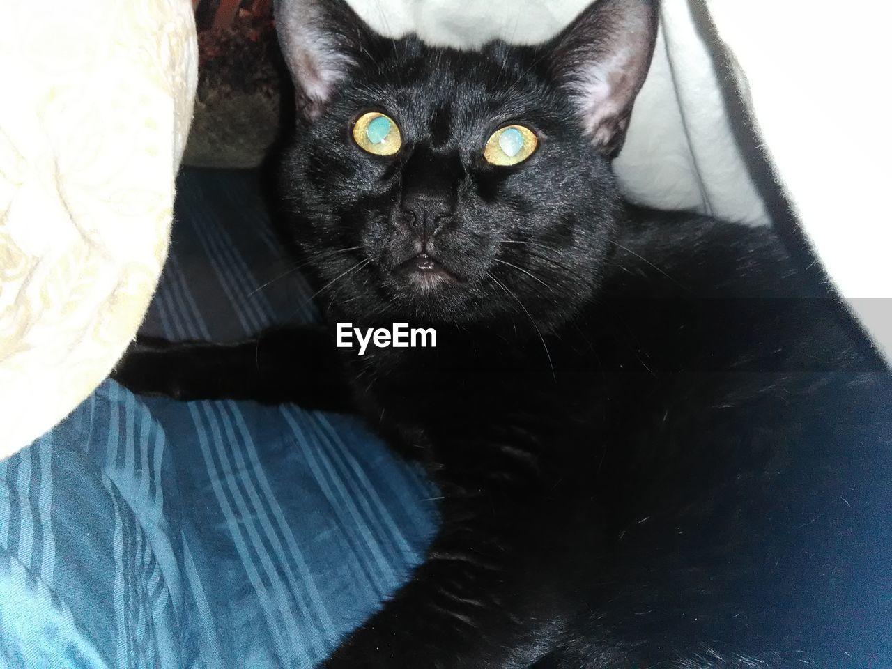 domestic, pets, domestic animals, mammal, cat, domestic cat, feline, vertebrate, one animal, looking at camera, indoors, portrait, black color, whisker, no people, relaxation, close-up, animal eye, yellow eyes