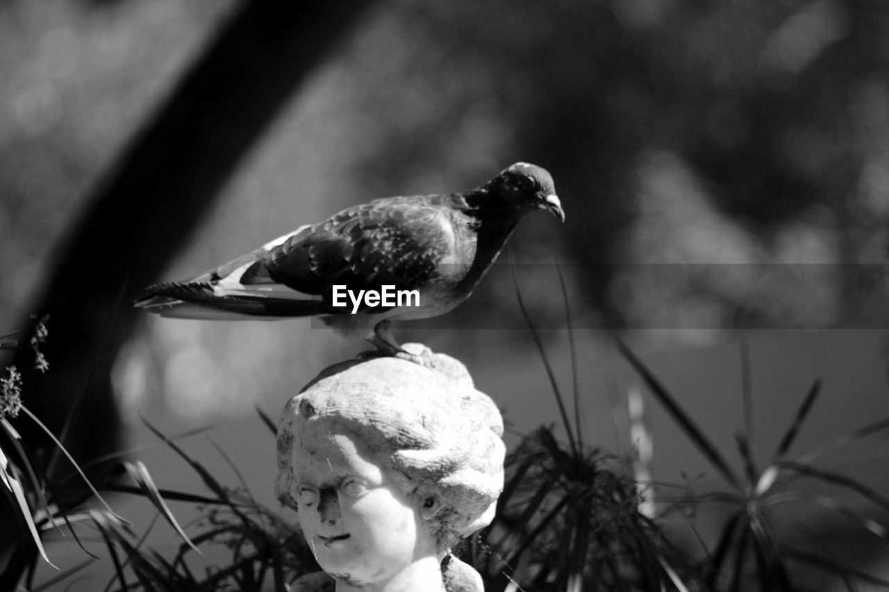 bird, focus on foreground, animal themes, animals in the wild, no people, close-up, nature, day, outdoors, animal wildlife, perching