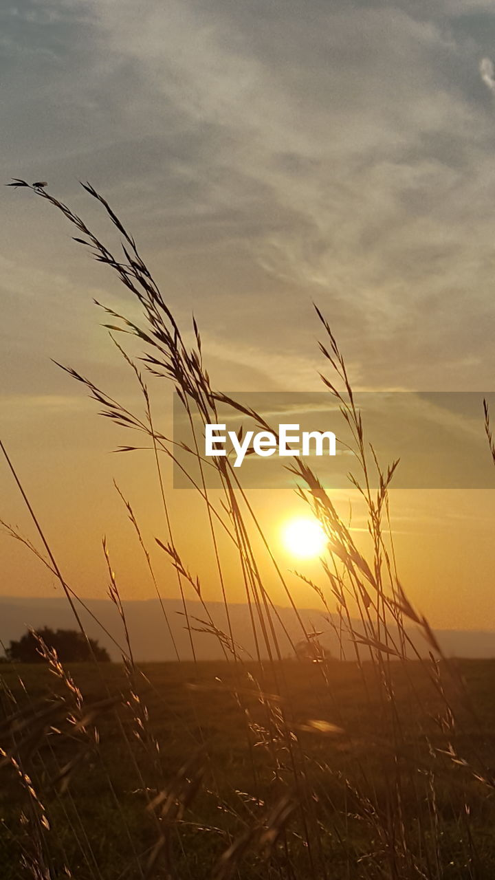 sunset, nature, beauty in nature, sun, tranquil scene, scenics, sky, tranquility, growth, no people, outdoors, silhouette, plant, cloud - sky, grass, field, straw, sunlight, rural scene, cereal plant, close-up, day
