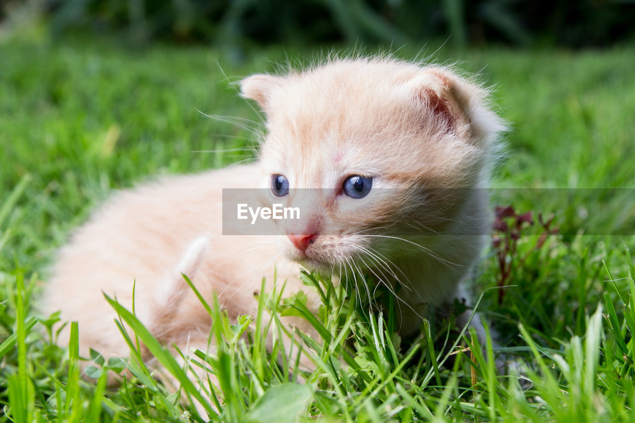 mammal, animal, animal themes, cat, domestic, domestic cat, pets, grass, feline, domestic animals, one animal, plant, vertebrate, kitten, field, green color, young animal, land, whisker, nature, no people, ginger cat