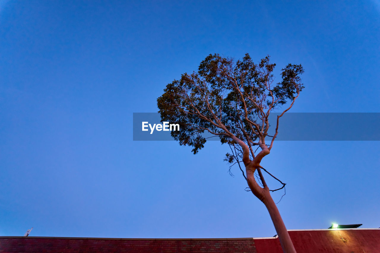 sky, blue, plant, tree, nature, low angle view, copy space, no people, clear sky, tranquility, growth, beauty in nature, outdoors, day, branch, single tree, architecture, wood - material, scenics - nature, built structure