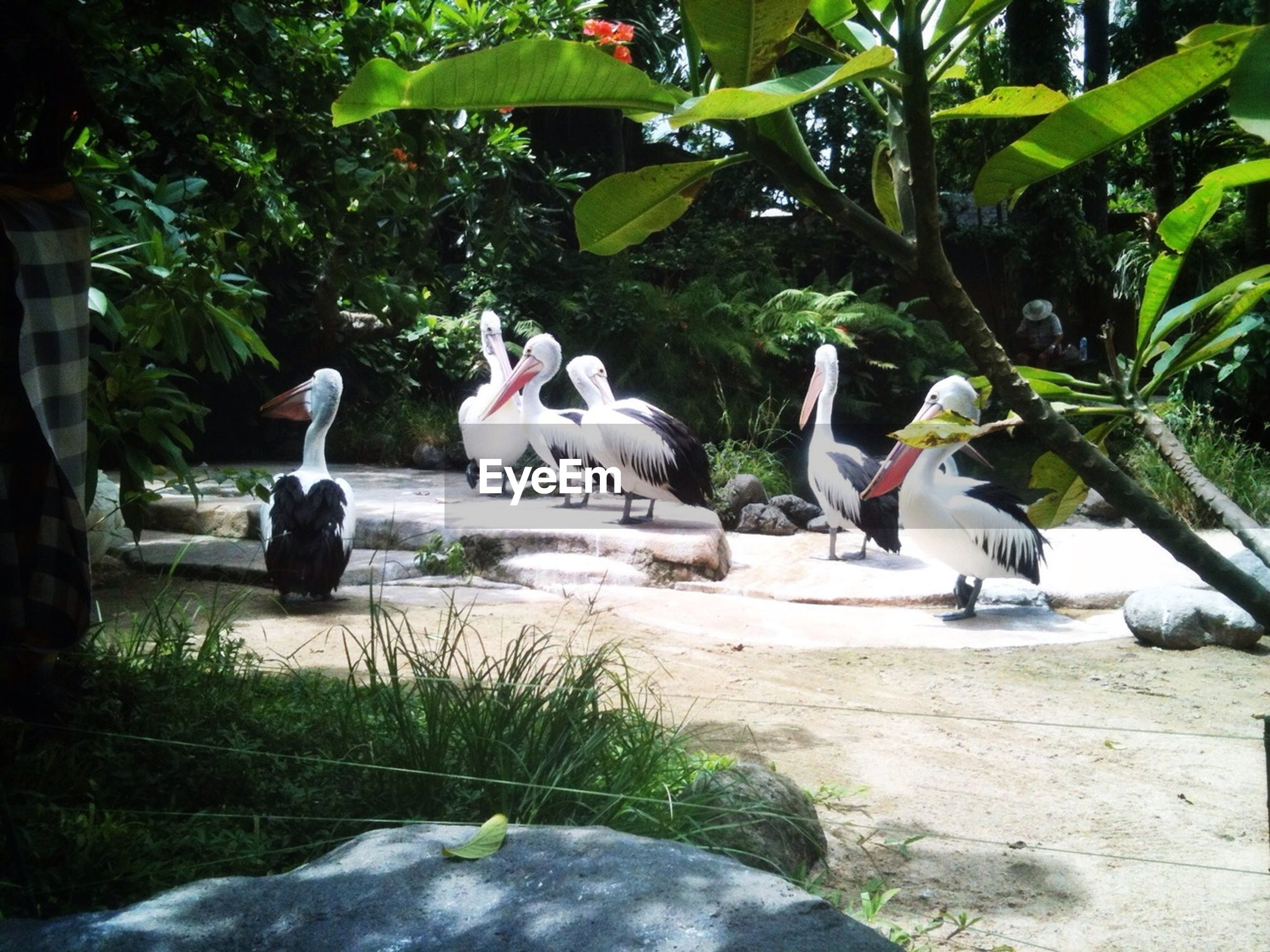 bird, animal themes, animals in the wild, wildlife, tree, nature, two animals, day, plant, outdoors, growth, no people, three animals, green color, perching, togetherness, medium group of animals, sunlight, zoology, white color