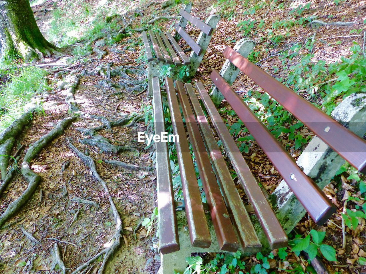 Benches In Old Growth Forest