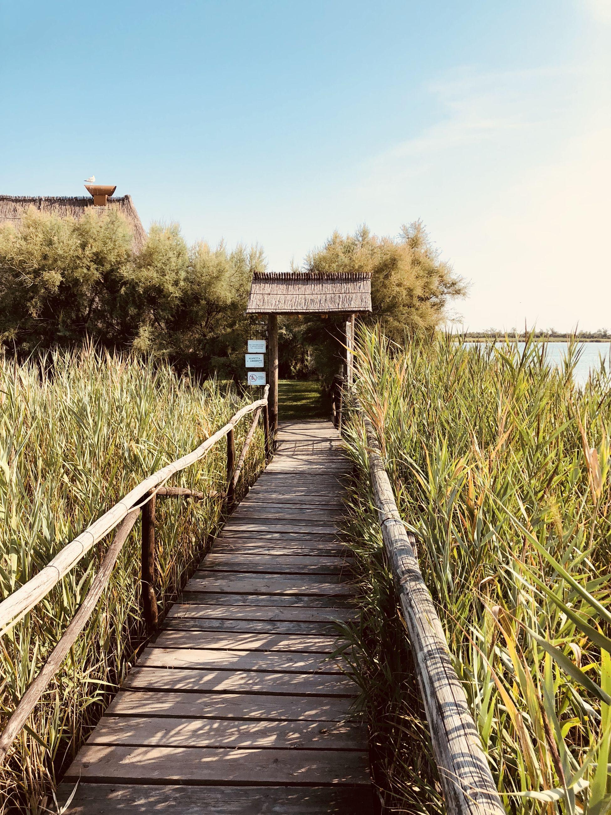 Boardwalk amidst plants against sky