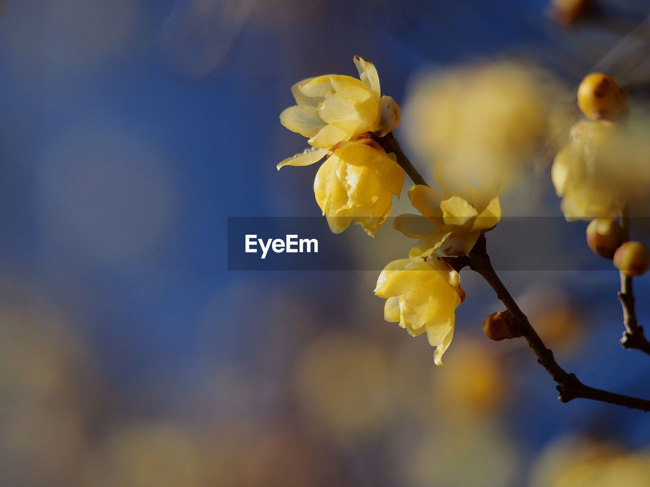 flower, fragility, nature, beauty in nature, yellow, petal, growth, outdoors, no people, freshness, day, close-up, flower head, plant, blooming, sky
