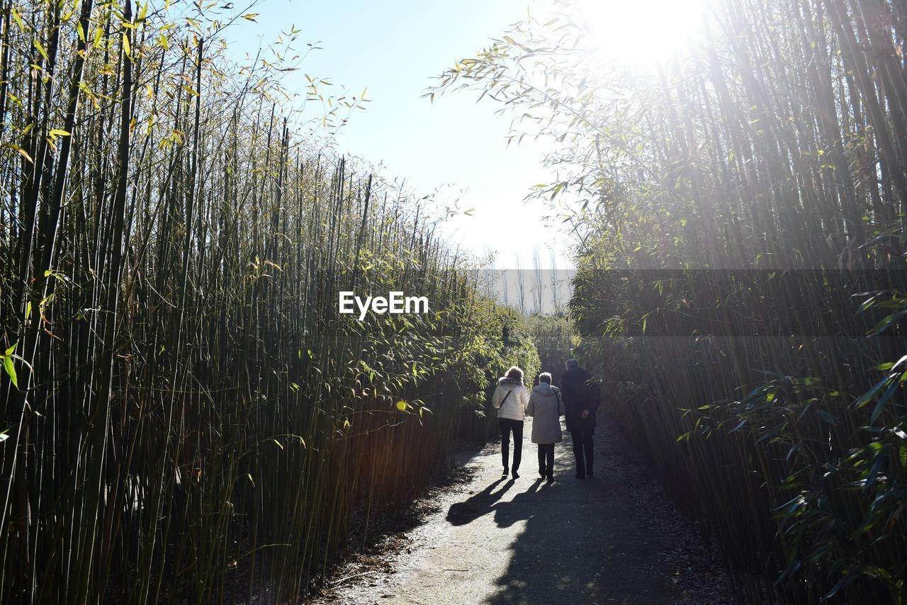 walking, two people, rear view, full length, growth, nature, men, real people, tree, plant, togetherness, women, day, sunlight, leisure activity, outdoors, bamboo grove, beauty in nature, grass, sky, people