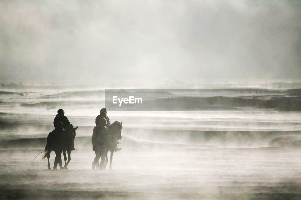 People with horses at desert